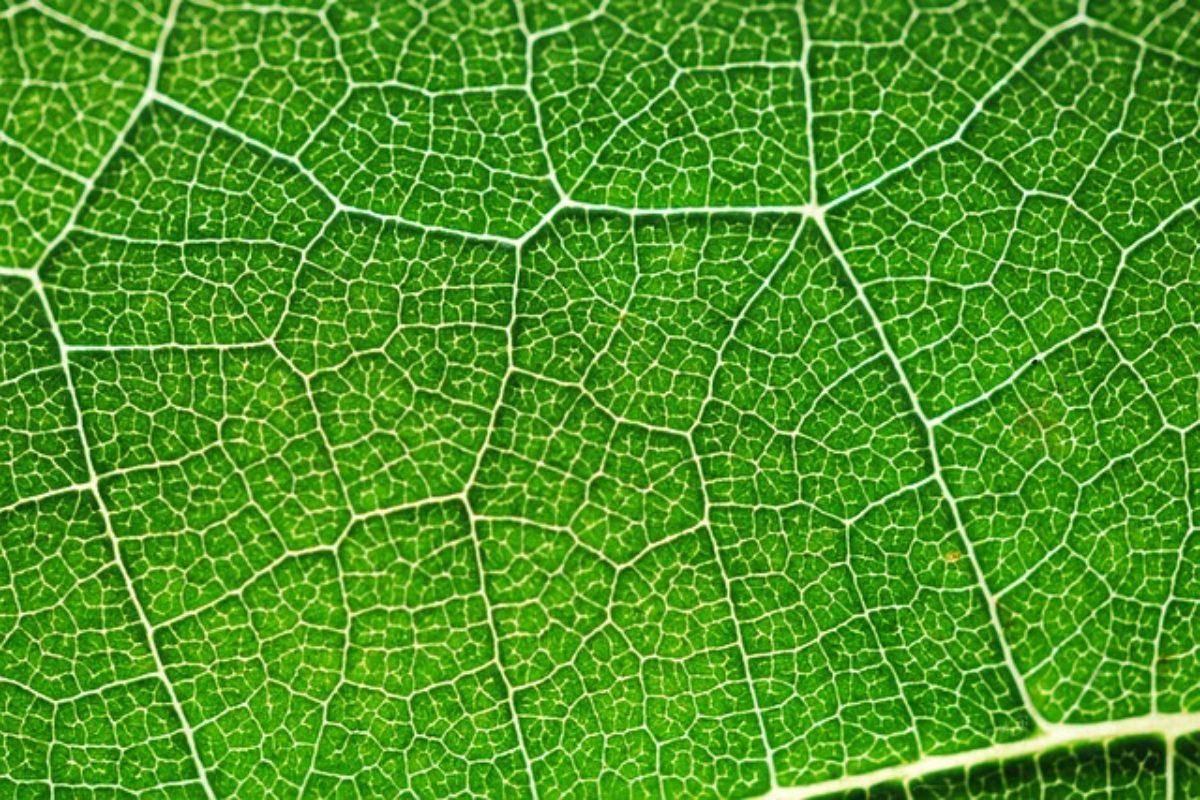 Production d'hydrogène par photosynthèse: bientôt moins toxique et moins coûteuse